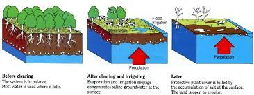 Irrigating with Salty Water Causes Salinity in the Soil