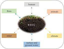 Soil Microorganisms have a Favourable Influence