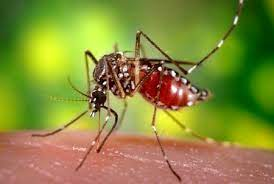 Causes of Yellow Fever Spread