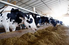 A new approach to lying and standing behavior indices for dairy cows