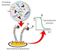 An Amperometric Genosensor for Detection of Virus Causing Marek's Disease in Poultry