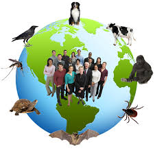 Zoonosis is Diseases Transmissible From Vertebrate Animals, Aside From Humans, to People