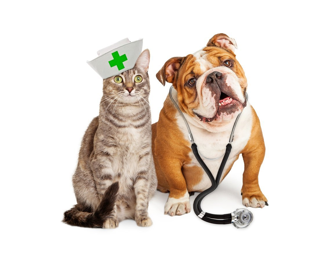 Veterinary Physiology Deals With the Investigation of Animal Systems