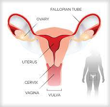 Ways to Improve Radiation Induced Sexual Toxicity in Gynecologic Cancer