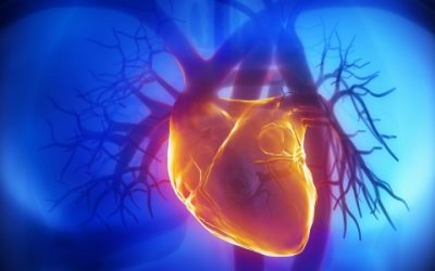 Prediction of Coronary Artery Disease Using a Combination of Methods for Training Radial Basis Function Networks