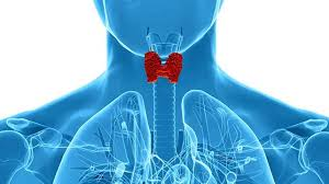 Evaluation of Prevalence of Changes in Thyroid Functional Tests in Mole Hydatiforme