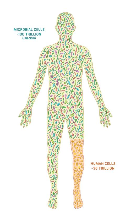 Bacteria in Human Health and Disease