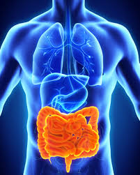 4th International Conference on Digestive Diseases 2020 Market Analysis