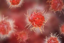 Drug Metabolism and Immunology