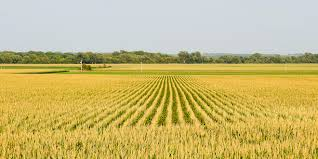 Impact of Plant Protection Activities on Production and Productivity of Crops in Jammu Region (J&K), India