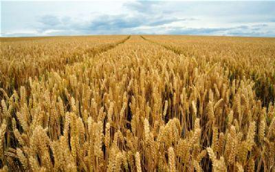 Combined Effect of Plant Density and Nitrogen Input on Grain Yield, Nitrogen Uptake and Utilization of Winter Wheat