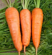 Manipulation of Plant Spacing and Steckling Size to Increase Growth and Seed Yield in Carrot (Daucus Carota L.) Under Temperate Conditions of Kashmir
